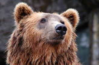 """Urs surprins """"la cumparaturi"""" intr-un magazin din California. Animalul s-a speriat de agitatia din jurul sau"""