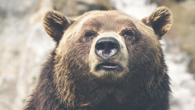 Ursi pe traseele turistice din Bucegi. Turistii, sfatuiti sa aiba asupra lor spray-uri speciale