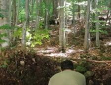 Ursoaica si puii de la lacul Sfanta Ana au fost relocati pentru a preveni impuscarea lor