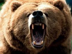 Ursul care a atacat doi padurari in Arges era turbat
