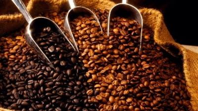 Zatul de cafea utilizari