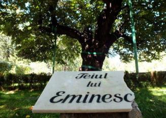 VERSURI DIN STRADA: La teiul lui Eminescu. De Emilia-Paula Zagavei