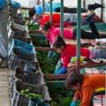 VIDEO. Reteaua subcontractorilor muncitorilor est-europeni din Germania, un reportaj Deutsche Welle
