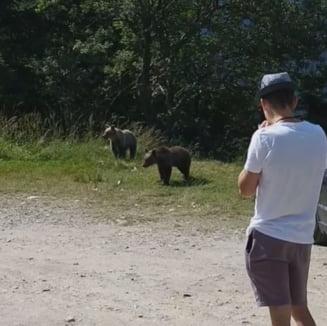 """VIDEO Imaginile inconstientei. Un barbat isi indeamna copilul sa se apropie de doi pui de urs: """"Hai, ma, sunt mici, ma bat cu ei!"""""""