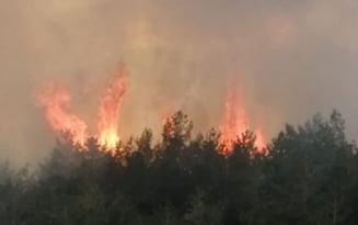 VIDEO Incendiu de litiera de padure, pe raza comunei buzoiene Vintila Voda