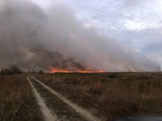"""VIDEO Incendiu violent in Delta Dunarii. Peste 700 de hectare de vegetatie au ars deja: """"A scapat de sub control"""""""