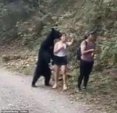 VIDEO Momentul surprinzator cand un urs se intalneste un grup de excursionisti