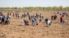 VIDEO si GALERIE FOTO: Peste 11 mii de oameni au plantat 115 mii puieti de stejari in Parcul Memoriei Nationale