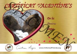 Valentine's Day: Indragostitii pot face cadou un urs de la Sanctuarul Zarnesti