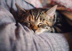 Valeriana te ajuta sa te relaxezi si sa dormi mai bine
