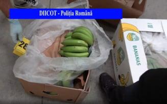 """Valoarea colosală a cocainei găsite printre banane la Chiajna: 503 kilograme dosite în 35 de baxuri. """"Provine din Columbia"""" VIDEO"""