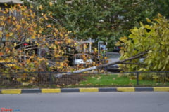 Vant puternic in Bucuresti: 19 copaci au cazut pe strazi si pe masini