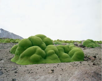 Vechiturile Terrei, la superlativ - Cele mai batrane organisme din lume (Galerie foto)