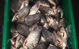 Verificari pe linie piscicola. 160 de kilograme de peste au fost confiscate