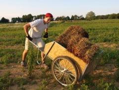 Vesti bune! Fermierii vor primi mai multi bani si nu vor mai exista limite pentru depunerea de proiecte