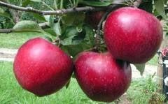 Vezi lista fructelor si legumelor cu urme mari de reziduuri de pesticide