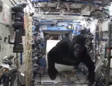 Viral: O gorila pe Statia Spatiala Internationala? (Video)