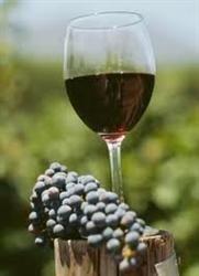 Virtutile terapeutice ale vinului