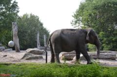Vrei sa vorbesti cu un elefant in limba sa? Acum poti