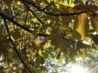 Vreme mult prea calda la sfarsit de octombrie, dar apoi se racoreste - prognoza meteo pe doua saptamani