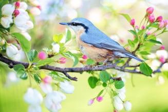 Vreme racoroasa si multe ploi - prognoza meteo pentru aprilie, mai si iunie