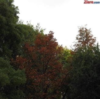 Vremea va fi rece in urmatoarele zile, dar apoi se incalzeste putin - prognoza meteo pe doua saptamani