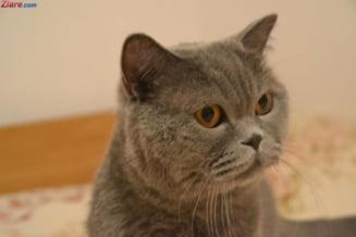 Western cu pisici, in acest weekend, in Bucuresti