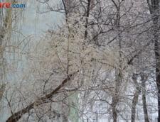Zapada mentine luni inchise unele scoli din tara