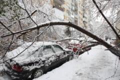 Zapada si viscol in Bucuresti: Peste 130 de copaci doborati si 65 de masini avariate