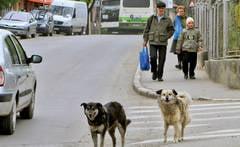 Zeci de caini comunitari, gasiti morti in Gaesti - locuitori acuza primaria de masacru