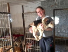 Zeci de caini maidanezi din Romania pleaca in Marea Britanie