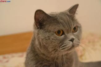 Zi istorica: Cainii si pisicile castiga noi drepturi in justitie