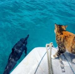 Ziua Internationala a Pisicii: Amelia, felina care a plecat pe apa intr-o aventura in jurul lumii (Galerie foto)