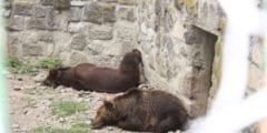 Zoo Targu-Mures, pe harta mondiala a gradinilor zoologice