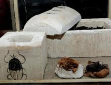 animale mumificate Egipt