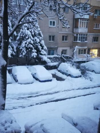 Buftea copac cazut masina