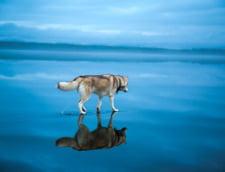 caine lac inghetat Rusia