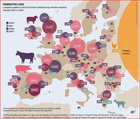carne vita porc UE