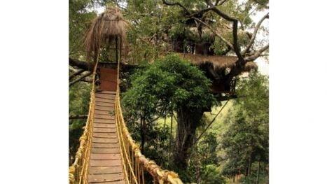 complex turistic jungla India