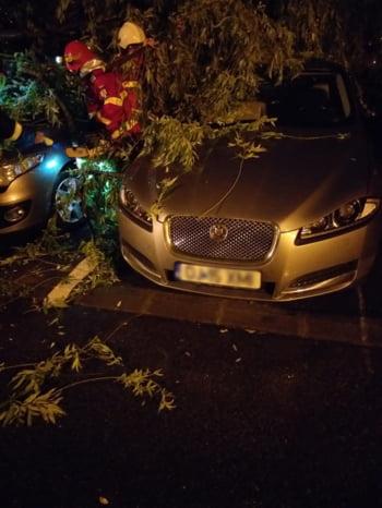 copac cazut masina Dolj