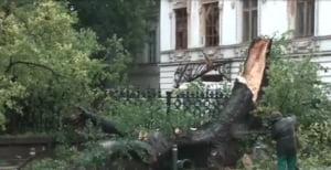 copac doborat Bucuresti