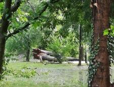 copaci rupti inundatii cismigiu