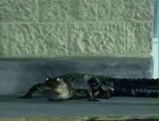 crocodil Tbilisi