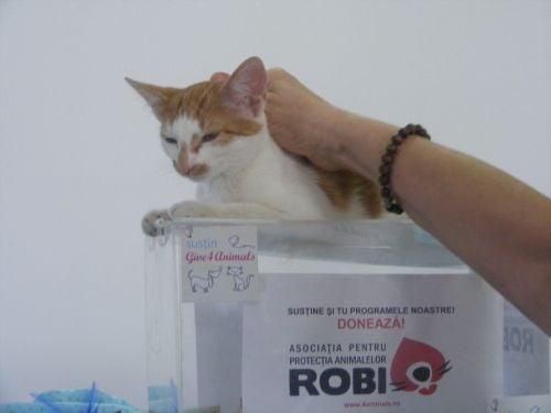 Cele mai frumoase pisici au luat cu asalt Romexpo - (Galerie