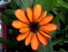 floare Statia Spatiala Internationala
