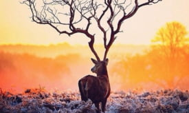 fotografie iluzie animal coarne