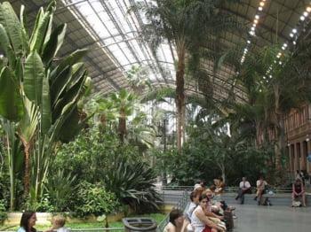 gara vegetatia tropicala