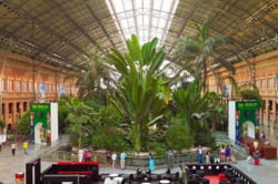 gradina botanica gara Madrid