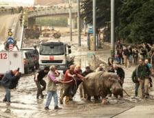 hipopotam Tbilisi