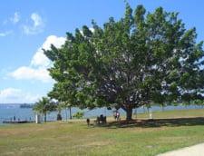 lac Paranoa Brasilia